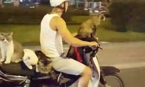 Motorcycle Rider uncaged-cats